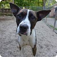 Adopt A Pet :: Whiskey - Decatur, GA