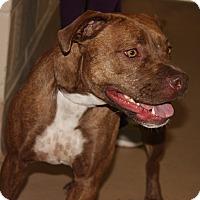 Adopt A Pet :: GEMMIE - Clayton, NJ