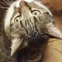 Adopt A Pet :: Marti - Mesquite, TX