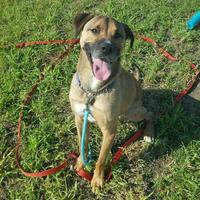 Adopt A Pet :: Lugnut - Grand Island, NE