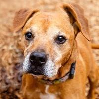 Adopt A Pet :: EINSTEIN - Decatur, GA