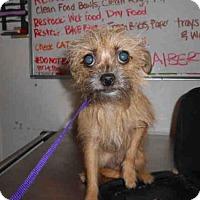 Adopt A Pet :: CHICA - Long Beach, CA