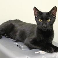 Adopt A Pet :: Miguel - Lynchburg, VA