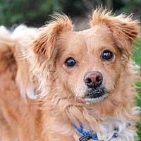 Adopt A Pet :: Randall - Denver, CO