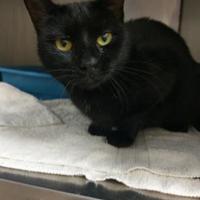 Adopt A Pet :: Lulu - Columbia, SC