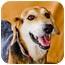 Photo 3 - Shepherd (Unknown Type) Mix Dog for adoption in Somerset, Pennsylvania - Cooper