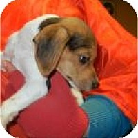 Adopt A Pet :: Holly - ADOPTED!! - Antioch, IL