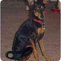 Adopt A Pet :: Buster - Florissant, MO