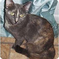 Adopt A Pet :: Ciara - Chandler, AZ