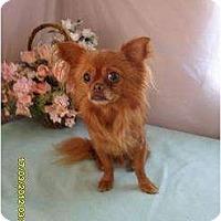 Adopt A Pet :: Wookie - Chandlersville, OH