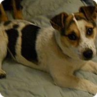 Adopt A Pet :: Peanut - dewey, AZ