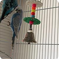 Adopt A Pet :: Bitsy - Punta Gorda, FL