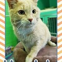 Adopt A Pet :: Herbie - Edwards AFB, CA
