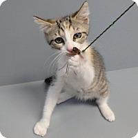Adopt A Pet :: Peppermint Patti - Seguin, TX