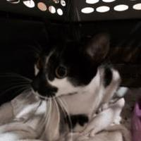 Adopt A Pet :: MADEIRA - St. Thomas, VI