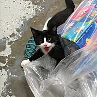 Adopt A Pet :: Vinny - Goshen, NY