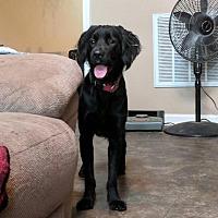 Adopt A Pet :: Matthius - Georgetown, KY