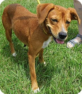 Beagle Mix Dog for adoption in Washington Court House, Ohio - Ciara