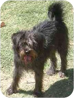 Terrier (Unknown Type, Medium)/Terrier (Unknown Type, Small) Mix Dog for adoption in Dodge City, Kansas - Toto