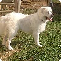 Adopt A Pet :: Nola - Knoxville, TN