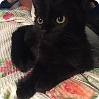 Adopt A Pet :: Diamond (needs an adult buddy) - Sterling Hgts, MI