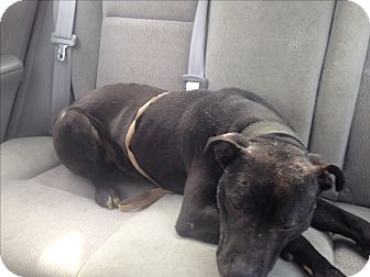 Pit Bull Terrier Mix Dog for adoption in East McKeesport, Pennsylvania - Rocky