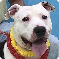 Adopt A Pet :: Hank - Evansville, IN