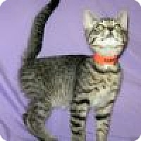 Adopt A Pet :: Santini - Powell, OH