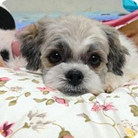 Adopt A Pet :: Edison - Richmond, BC