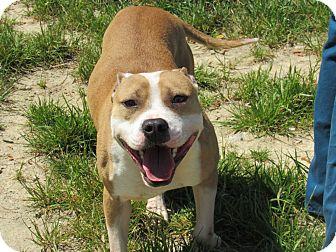 Adopt A Pet :: Elmer  - Henderson, NC