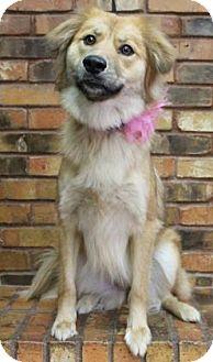 Australian Shepherd Mix Dog for adoption in Benbrook, Texas - Lucy