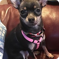 Adopt A Pet :: Azalea - San Diego, CA