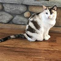 Adopt A Pet :: Missy - Stanwood, WA
