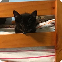 Adopt A Pet :: William - McKinney, TX