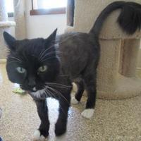 Adopt A Pet :: Izzy - Kalispell, MT