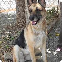 Adopt A Pet :: princess - Yucaipa, CA