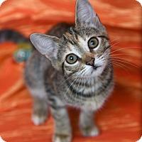 Adopt A Pet :: Barley - Chattanooga, TN