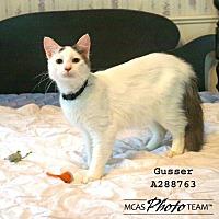 Adopt A Pet :: GUSSER - Conroe, TX