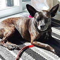 Adopt A Pet :: Kayla - Rigaud, QC