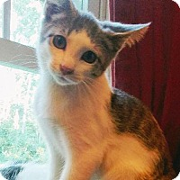 Adopt A Pet :: Luigi - South Saint Paul, MN