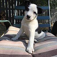 Adopt A Pet :: Sandy - Regina, SK