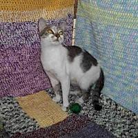 Adopt A Pet :: PURDY - Winter Haven, FL