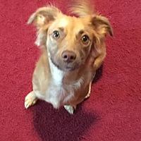 Adopt A Pet :: Bella - Tipp City, OH