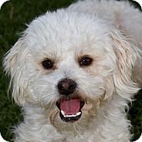 Adopt A Pet :: Preston - La Costa, CA
