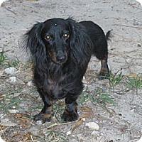 Adopt A Pet :: Percy - Cantonment, FL