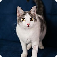Adopt A Pet :: Meighan - Eagan, MN