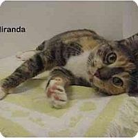 Adopt A Pet :: Miranda - Portland, OR
