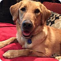 Adopt A Pet :: Lanie - St Louis, MO
