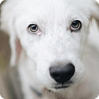 Adopt A Pet :: Chloe Jane - Minneapolis, MN