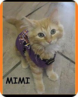 Domestic Shorthair Cat for adoption in Batesville, Arkansas - Mimi